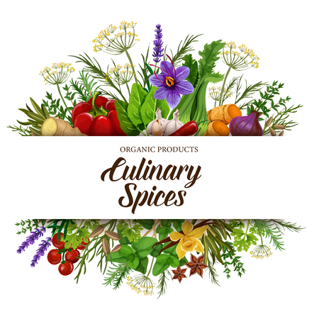 Culinary spices with vegetable seasonings, herbs and condiments. Vector pepper, basil and tomato, ginger, garlic and vanilla, anise, thyme and rosemary, dill, parsley and saffron, lavender and fennel