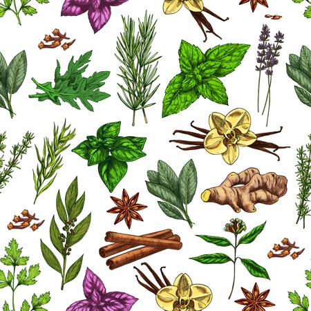 Épices et herbes de fond sans couture avec assaisonnements alimentaires et croquis de condiments. Vector persil, menthe et romarin, vanille, cannelle et gingembre, basilic, thym et anis étoilé, feuille de laurier, clou de girofle Vecteurs