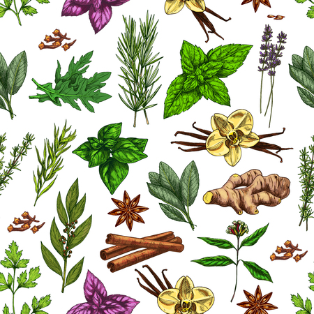 Spices and herbs seamless pattern background with food seasonings and condiments sketches. Vector parsley, mint and rosemary, vanilla, cinnamon and ginger, basil, thyme and star anise, bay leaf, clove Stock Illustratie