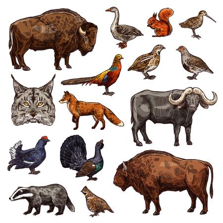 Animali selvatici e icone degli uccelli del tema di vettore di sport di caccia. Bozzetti di bufalo africano, bisonte e volpe di bosco, fagiano, oca e quaglia, bue, gallo cedrone e lince, scoiattolo, tasso, pernice e beccaccia Vettoriali