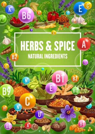 Vitamins in spices, herbs, seasonings and condiments. Chili pepper, garlic and cinnamon, vanilla, ginger and basil, nutmeg, turmeric and rosemary, dill, lavender and poppy flower. Health food vector Banco de Imagens - 126480286