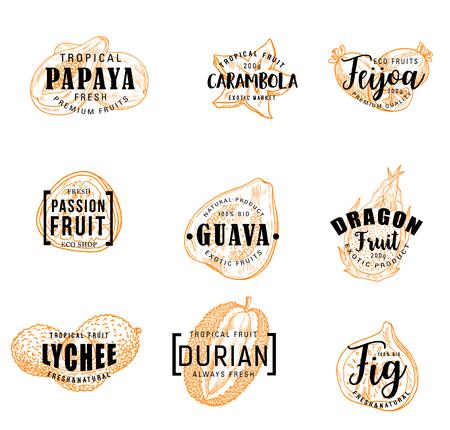Lettrage de fruits exotiques de croquis de baies tropicales. Papaye, feijoa et figue, durian, fruits de la passion et du dragon, goyave, litchi et icônes vectorielles de carambole. Conception d'étiquettes pour boissons alimentaires et jus de fruits naturels Vecteurs