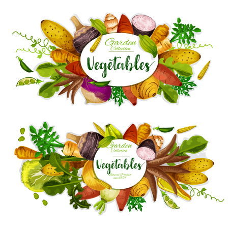 Exotic vegetables, beans and herbs with sweet potato, radish and corn, yam, celery and turnip, jerusalem artichoke, cassava and arracacia, cyclanthera, jicama and chayote. Farm veggies vector design Imagens - 126480292