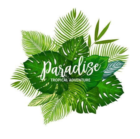 Tropical palm leaves poster. Summer vacation and exotic travel themes design. Monstera, banana tree and fan palm green foliage