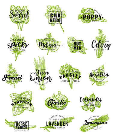 Herbs and spice icons with lettering. Vector sorrel and cilantro, poppy and savory, melissa and nutmeg, celery and fennel, green onion and parsley. Angelica and marjoram, garlic or coriander, lavender Ilustracja