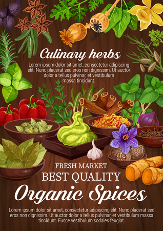 Spice and herbs, cooking seasoning, culinary. Vector rosemary and dill, wasabi and garlic, nutmeg and clove, purple onion and Korean carrot. Cinnamon and basil, bell pepper and anise, kitchen