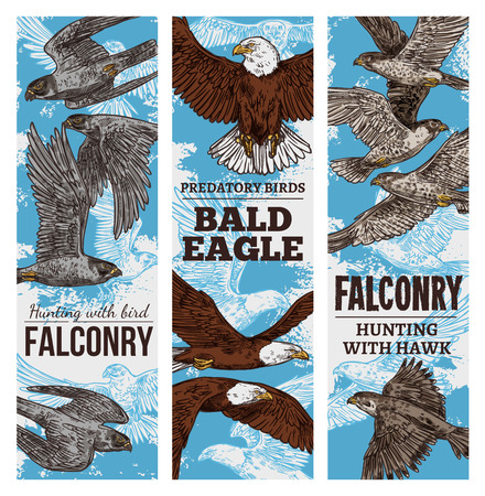 Eagles, falcons and hawks predatory birds sketch. Vector falconry or falcon hunt banners of vulture birds of prey or bald eagle