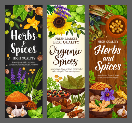 Cooking spices seasonings and culinary herbs banners. Vector organic natural herbal flavorings bay leaf, turmeric curry or parsley and dill, lavender or garlic with pepper and horseradish or nutmeg Ilustracja