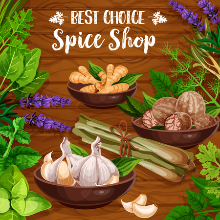 Cooking spices, culinary seasonings and herbs. Vector organic natural herbal flavorings garlic, ginger or nutmeg and sage or bay leaf, lavender or lemongrass with parsley and dill