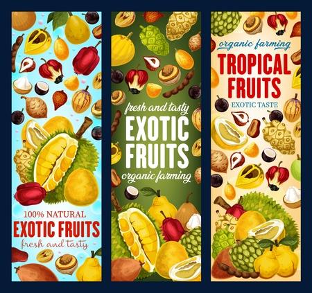 Bannières de fruits tropicaux exotiques. Vector pandanus, durian ou kaki et tamarin, sapotille ou pomme de cajou avec agrumes et mandarine pomelo, bergamote ou physalis et kiwano ou kumquat Vecteurs