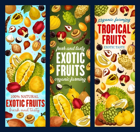 Exotic tropical fruits banners. Vector pandanus, durian or persimmon and tamarind, sapodilla or cashew apple with pomelo citrus and tangerine, bergamot or physalis and kiwano or kumquat