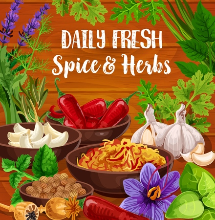Seasonings of herbs and cooking spices, vector. Chili and garlic, nutmeg and poppy, fresh and dried saffron. Rosemary and mint, basil and dill, cilantro and lavender, coriander seeds Illustration