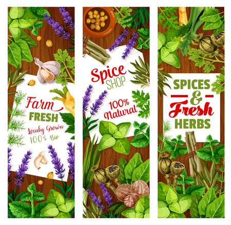 Spice and herbs, seasoning and greenery, cooking condiments. Vector cardamom and ginger, lavender and parsley, nutmeg and basil, lemongrass and leek, garlic and rosemary, poppy and dill, leek