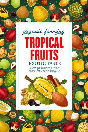 Exotic tropical fruits, whole and cut. Vector durian and cherimoya, mangosteen and quince, litchi and pomelo, sapodilla and sugar apple. Ackee and tamarind, noni and canistel