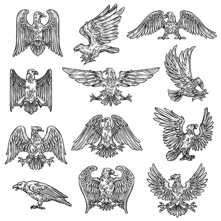 Eeagles herladic sketch icons. Vector gothic heraldry bird design, coat of arms and royal shield symbol or tattoo eagle fly with spread wings and claws Çizim