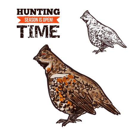 Grouse bird vector sketch. Hunter trophy wild bird, hazel grouse, hunting open season time