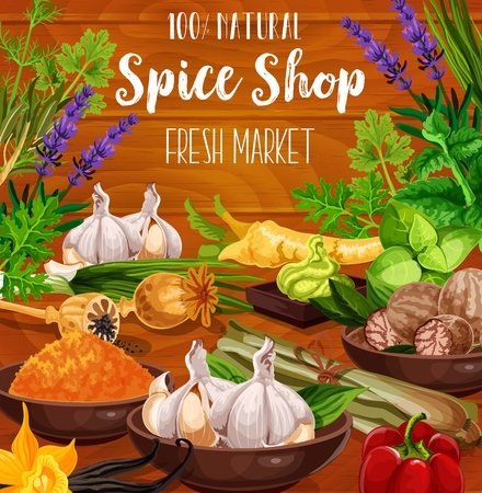 Condiment herbs, spices and seasonings. Vector spice shop poster of culinary herbal flavorings garlic, basil or parsley and dill, organic oregano or cumin with thyme and turmeric curry or vanilla