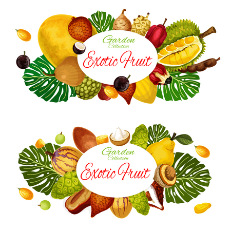 Exotic natural fruits harvest of pandanus, durian or persimmon and pomelo citrus. Vector tropical harvest soursop, sapodilla and tangerine, bergamot or physalis, kiwano and kumquat