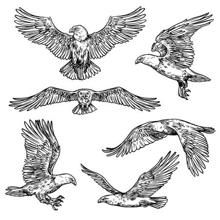 Schizzi di volo dell'aquila, uccello con ali spiegate e artigli affilati con becco. Icona di falco isolato vettoriale, simbolo di nobiltà, potere e forza. Profilo di falco selvatico in movimento Vettoriali