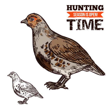 Hunting season, wild grouse in brown plumage. Bird or poultry prey, hunt time, hunters club. Vector fat animal with beak and wings, shooting sport or hobby, live flying aim in sketch style isolated