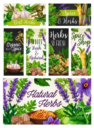 Kruiden en specerijen, natuurlijke smaakmakers, voedselspecerijen. Vector knoflook en rozemarijn, papaver en melissa, selderij en prei. Lavendel en gember, citroengras en laurier, peterselie en saffraan, nootmuskaat