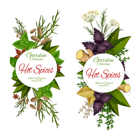 Herbs and spices, seasonings icons, grocery store. Cardamom and ginger, parsley and dill, basil and melissa, sage and anise. Vector natural condiments from garden, market products greens and greenery Stock Vector - 118523458