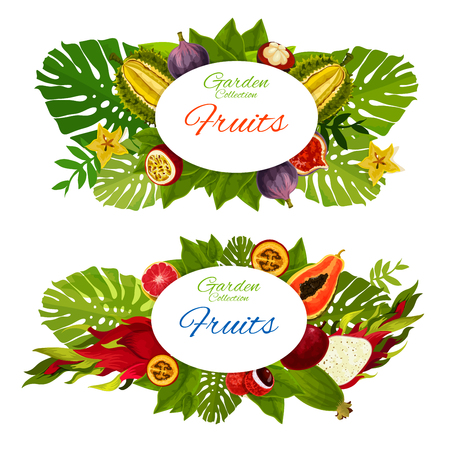 Exotic vector fruits and green palm leaves. Tropical guava, juicy mangosteen, passion fruit and papaya, ripe durian and pitahaya, carambola and maracuya, grapefruit and pitaya on tree branches