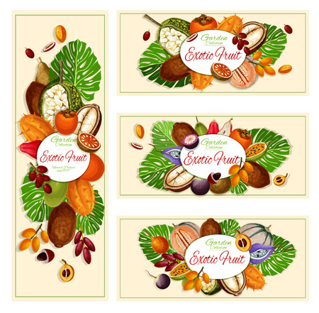 Exotic fruits, garden harvest and food banners. Vector caimito and kiwano, miracle fruit and kumquat, pepino and mamey. Marang and persimmon, papaya and loquat, chompu and akebi fruits