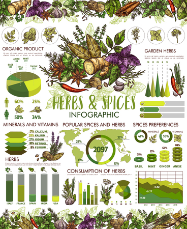 Herbs and spice infographic, cooking seasonings. Vector anise star and basil, mint and chili pepper, rosemary and parsley charts, garlic and ginger, dill and cinnamon, vanilla and lavender