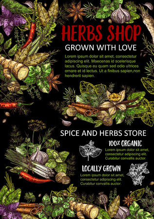 Herbs, condiments and spices store vector. Seasoning ginger and basil, dill, parsley, bay leaves and vanilla, cinnamon and chili pepper, mint and poppy, cilantro and coriander flavorings Imagens - 124356559