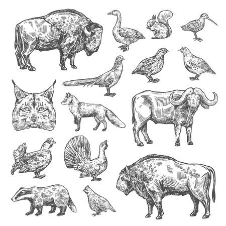 Jagdsport, Vögel und Tiere isolierte Skizzen. Vektorluchs und Büffel, Haselhuhn und Rebhuhn, Waldschnepfe und Blackcock. Wachtel und Dachs, Ente, Auerhahn, Fuchs und Eichhörnchen, Bison und Rotluchs
