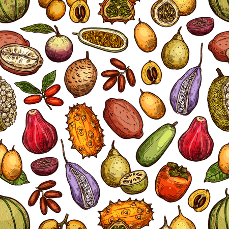 Raccolta di frutti tropicali esotici di cachi, akebia e melone cantalupo, durian o jackfruit. Vettoriali
