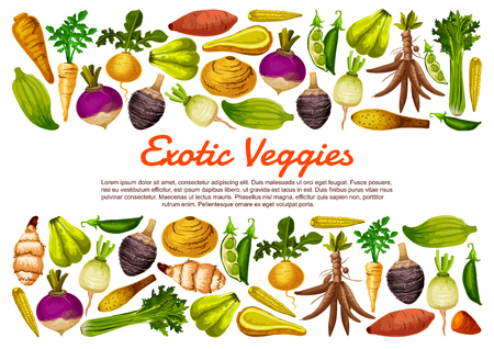 Root vegetables and exotic veggies farm harvest poster. Vector Jerusalem artichoke, radish and sweet potato with cassava, parsnip celery and bread beans, arracacia vegetable and chayote Illusztráció