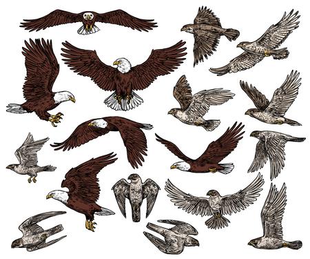 Icone di schizzo di uccelli rapaci predatori.