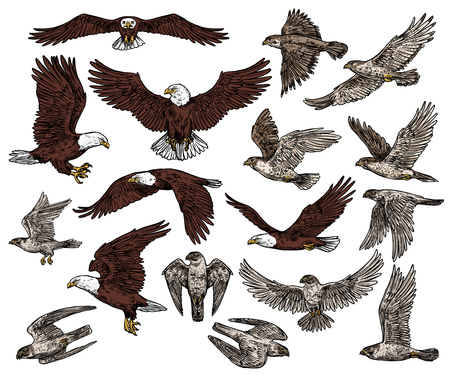 Predatory birds of prey  sketch icons.