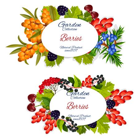 Frutti di bosco e giardino, raccolto di fattoria biologica naturale.