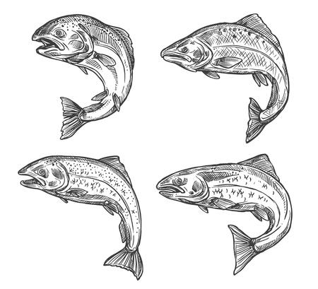 Zalm en forel vissen schets geïsoleerde pictogrammen. Vector Illustratie