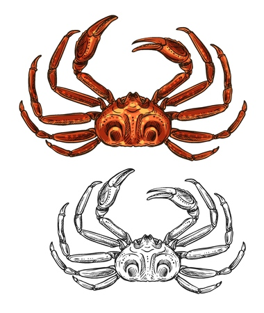 Crab seafood sketch isolated icon. Vector sea fishing or ocean fisher catch crustacean, fishery sea food underwater animal, zoology crab and salty snacks symbol Imagens - 124122746