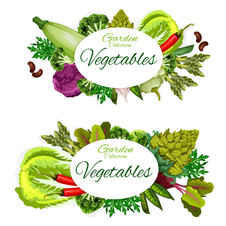 Vegetable, beans and culinary herbs  posters of organic farm veggies.