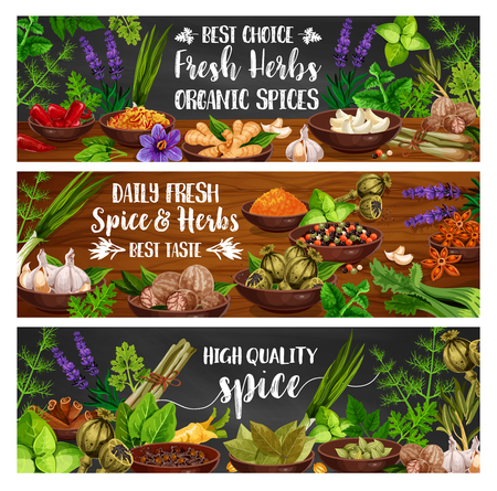 Fresh herbs and spices  banners of cooking condiments and vegetable seasonings.