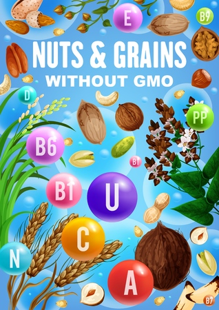 Vitamins and minerals in nuts, cereals and grains vector design with food ingredients without GMO.