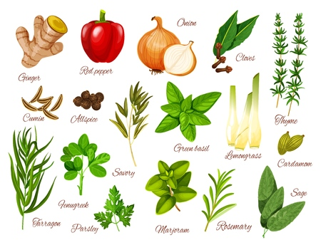 Spices, herbs and vegetable seasonings vector icons of food condiments. Red pepper, green basil and rosemary, ginger, onion and thyme, parsley, marjoram and cardamom, cumin, tarragon and cloves Zdjęcie Seryjne - 124097524