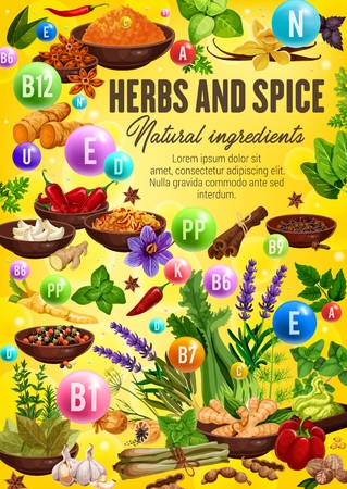 Vitamins and minerals in spices and herbs. Vector chili pepper, ginger and garlic, vanilla, basil and cinnamon, star anise, dill and turmeric, saffron, bay leaf and celery health benefits design