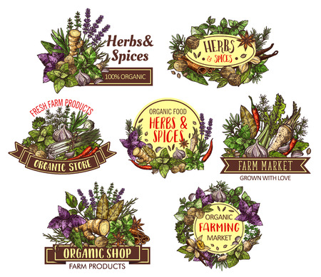 Spices and herbs, cooking food ingredients  sketches with seasonings and condiments.