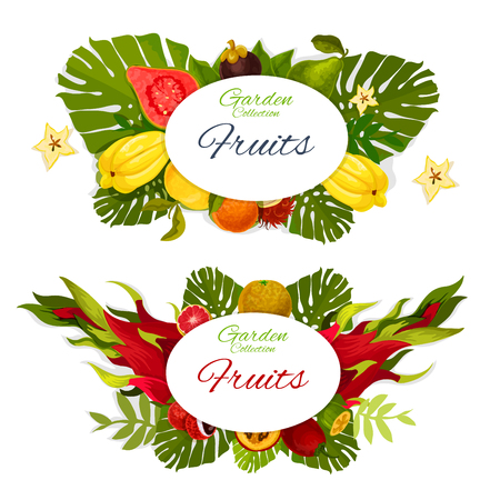 Exotic tropical fruits vector design with orange, grapefruit and lychee, feijoa, passion and dragon fruits, pear, guava and mangosteen, rambutan and tamarillo. Tropic berries with palm leaves posters