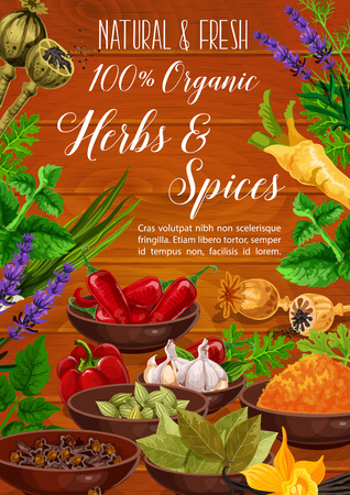 Herbs, spices, cooking condiments and vegetable seasonings vector poster. Pepper, garlic and parsley, chili, vanilla and mint, dill, turmeric and cardamom, horseradish, lavender and poppy flower seed