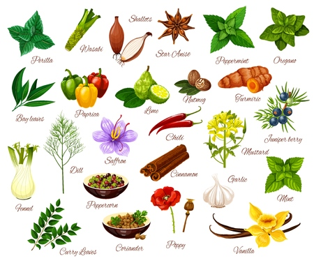 Spices and cooking herbs, herbal and vegetable or fruit seasonings. Vector culinary condiments perilla, wasabi or shallot and anise, oregano with paprika or lime and mustard, juniper berry and vanilla Illustration