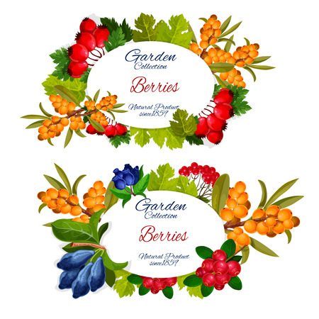 Garden berries harvest banners. Vector dog-rose briar, sea buckthorn or honeysuckle and cowberry or foxberry, viburnum and juniper berry Illustration
