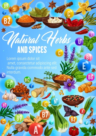 Spices, cooking herbs and herbal seasonings vitamins. Stock Vector - 121172621