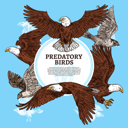 Eagles, falcons and predatory birds.
